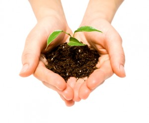 Lead nurturing - sowing the seeds of trust